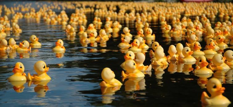Duck Derby 2016